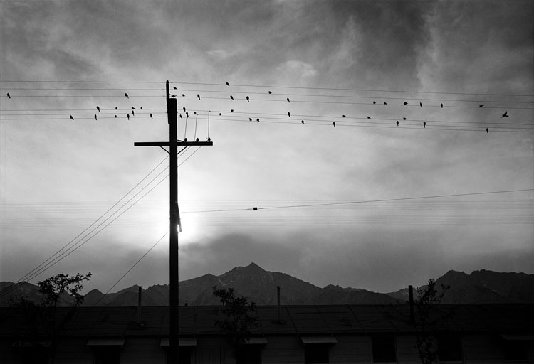 Ansel Adams, 'Manzanar birds on wire' - The Culturium