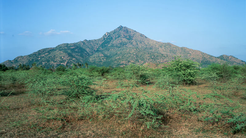 Ditmar Bollaert, Annamalai Nagar - The Culturium
