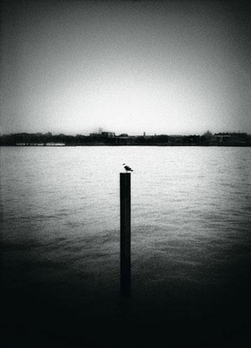 Kon Markogiannis, Bird - The Culturium