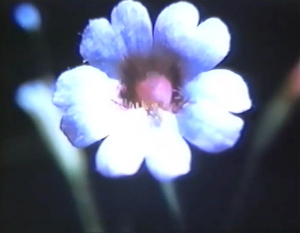 Marie Menken, Glimpse of the Garden - The Culturium