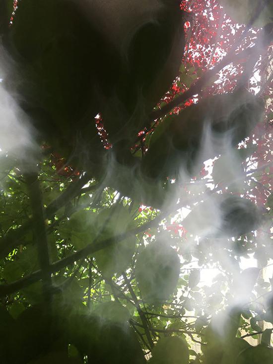 Tal Waldman, Trees and Light - The Culturium