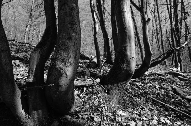 Tobias Wilkinson, German Forest Primer - The Culturium
