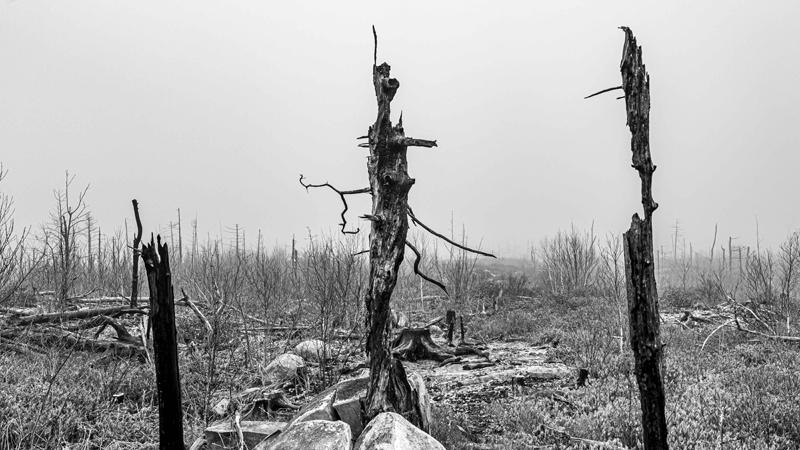 Jerry Katz, Burnt Forest - The Culturium